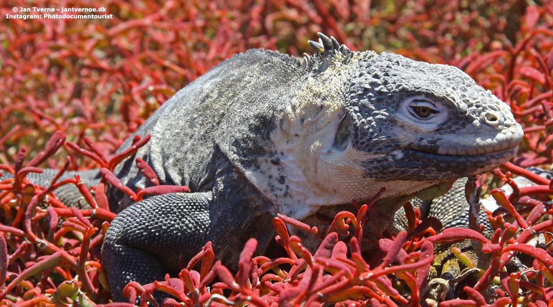 Plaza Sur i Galapagos, Ecuador - All Exclusive Travel