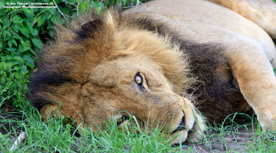 Queen Elizabeth National Park i Uganda - All Exclusive Travel
