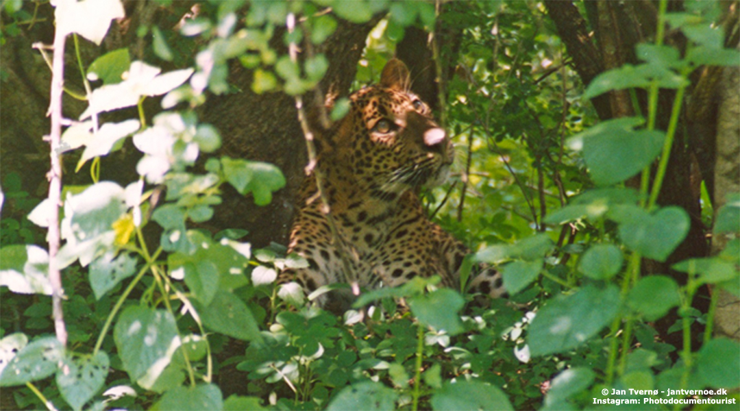 Yala National Park i Sri Lanka - All Exclusive Travel
